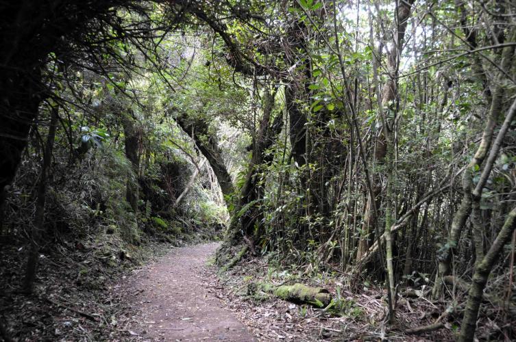 Woods around Volcan Poas