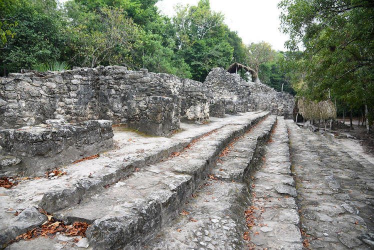 Big steps for the tiny ancient mayas
