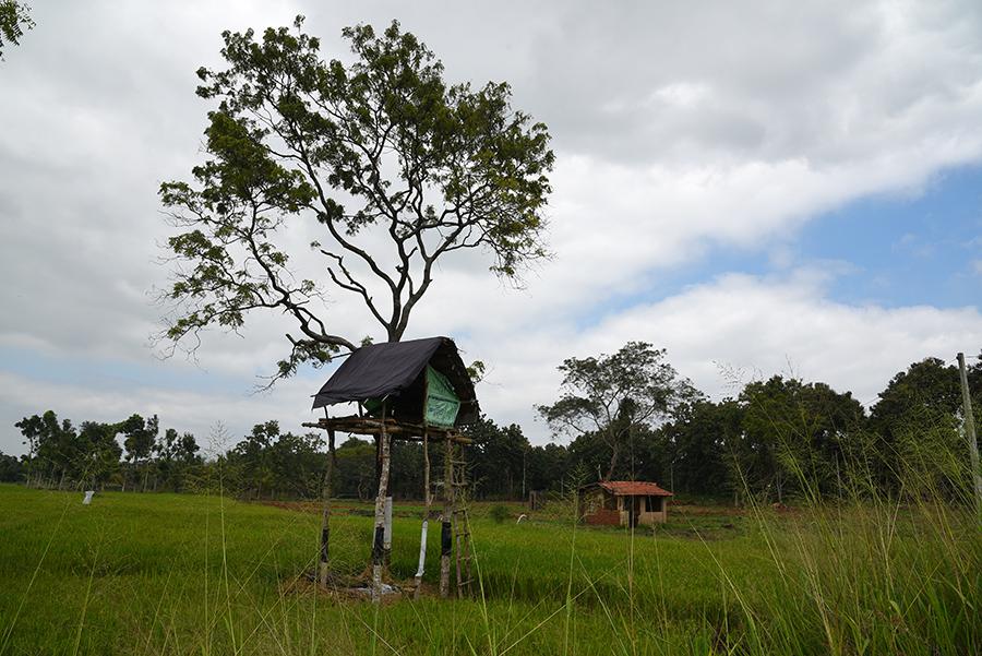 Elephant watchtower