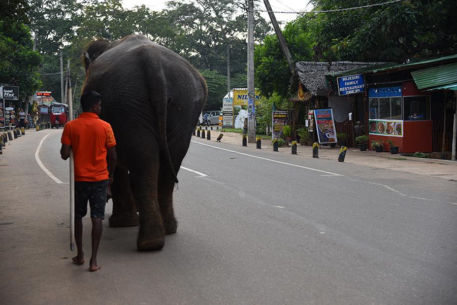We walk the dogs they walk their elephants