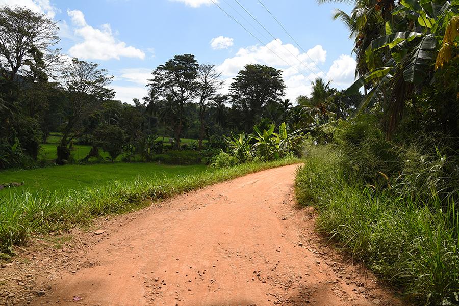 Peace full road