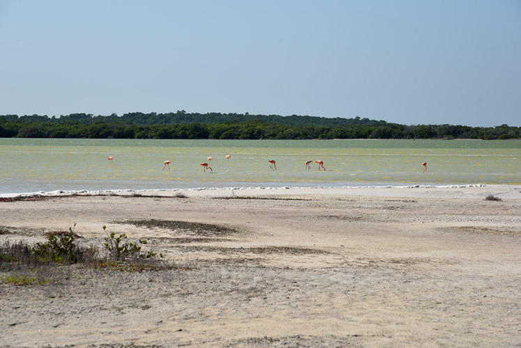 Flamingos in their natural surroundings