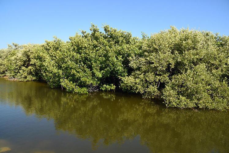 Salt water flora
