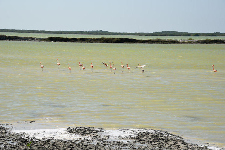 Flamingos go on the run