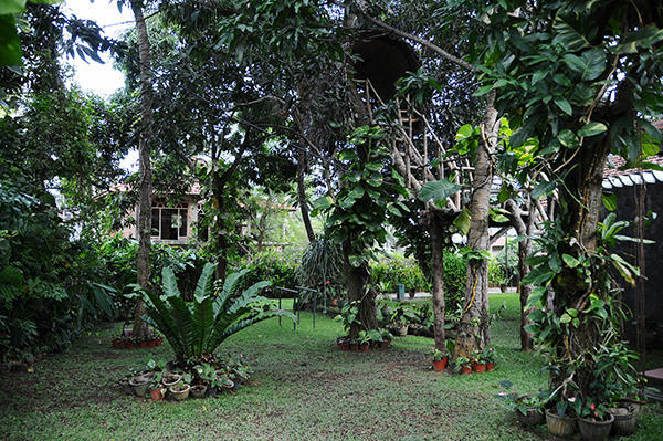 Guest house garden -jungle feeling