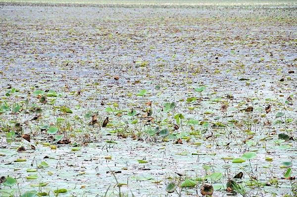 Sea rose lake on the road