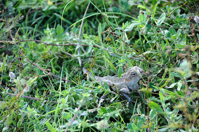 Sri lankan fauna