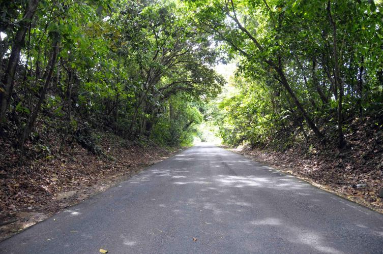 Way to Palmar Norte