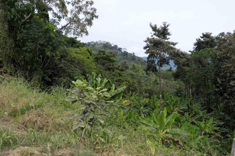 Pura jungle