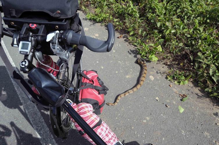 Stoned snake