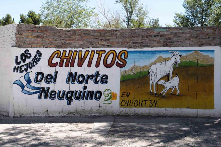 The best goats in Argentina