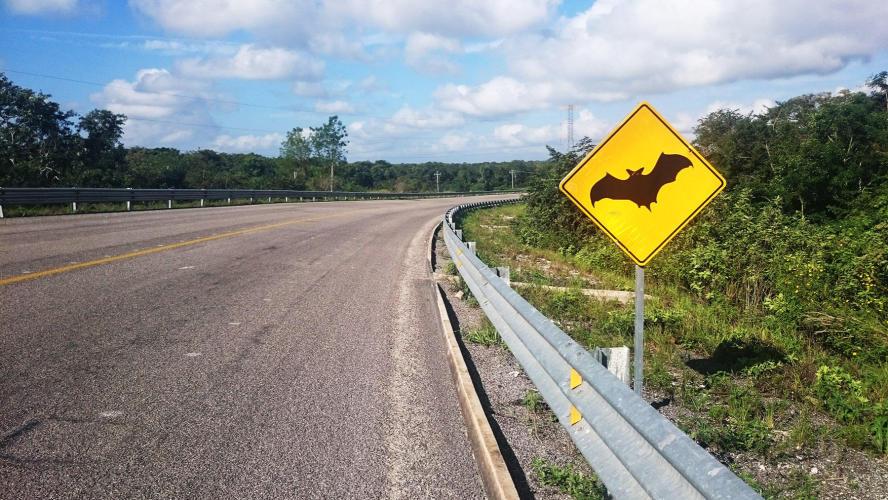Beware of the bats!!!!