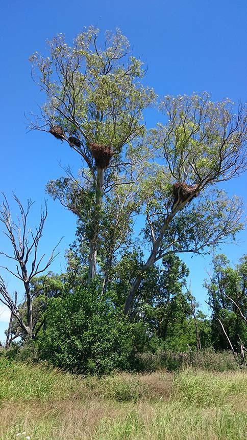 Parrot nests