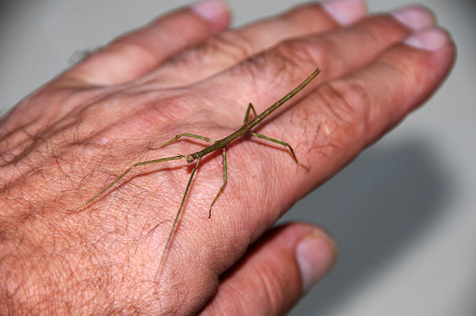 Visit of a stick insect