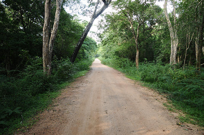 Way to Pidurangala
