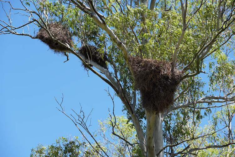 Close up of parrot nests
