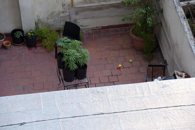 Sweet neighbor´s garden!!!!