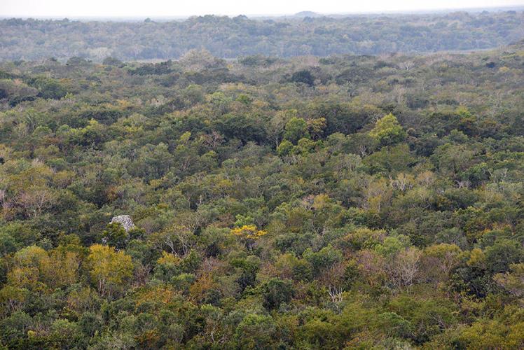 Pure jungle
