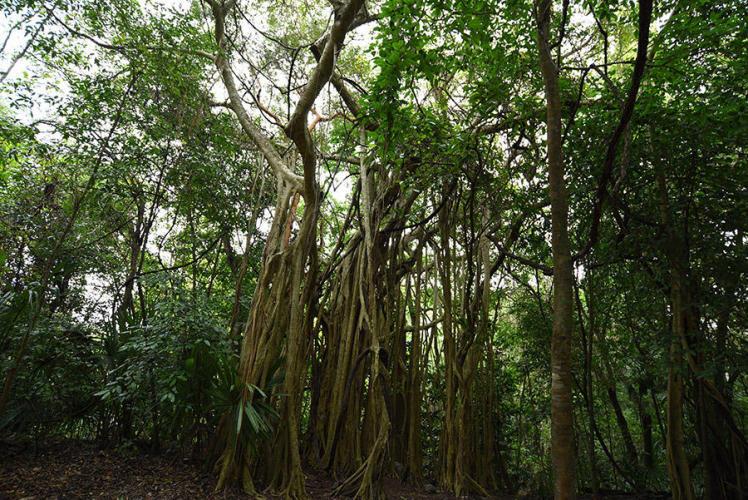 Nice jungle