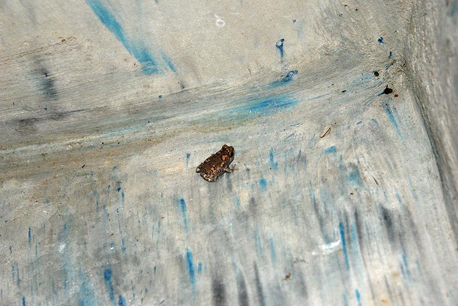 Mini frog visit