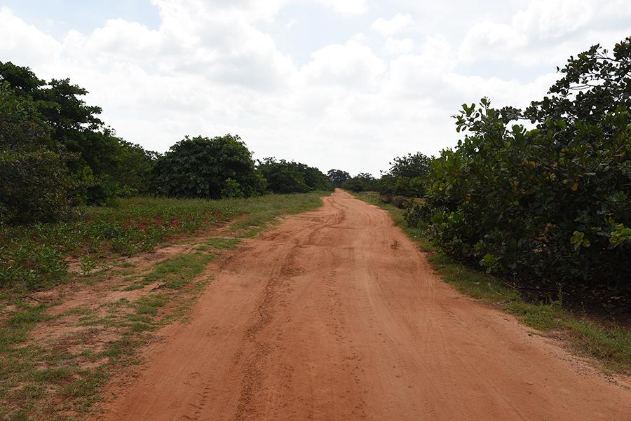 Way to Wilpattu National Park