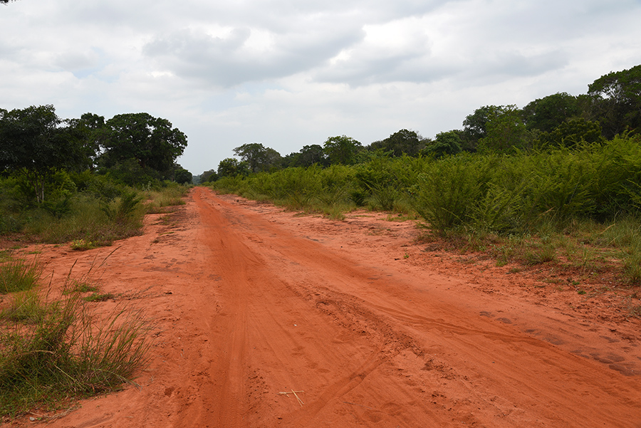 Wilpattu National Park dirty road