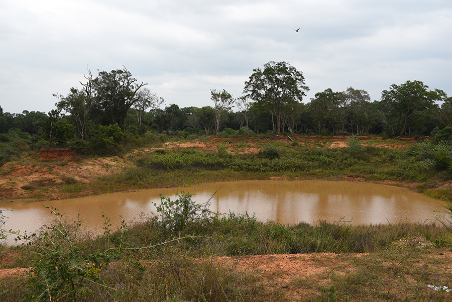 Elephant drinking spot