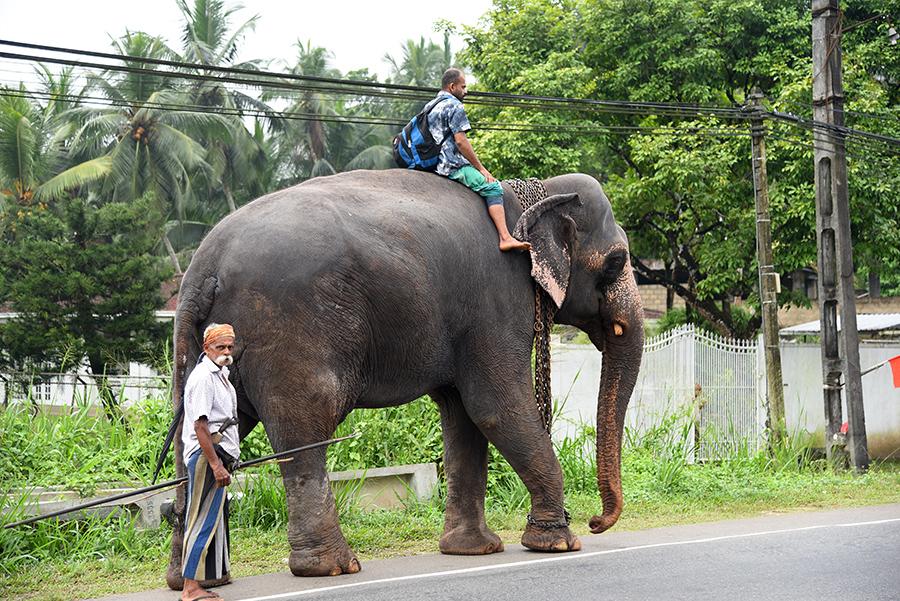 Elephant taxi