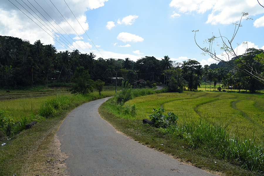 Small road to the resort