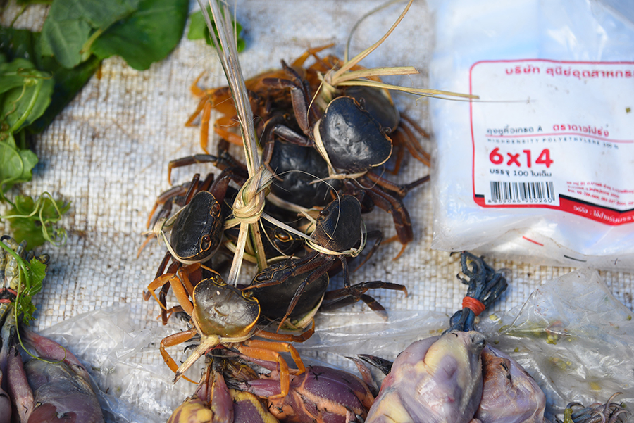 Dying crabs