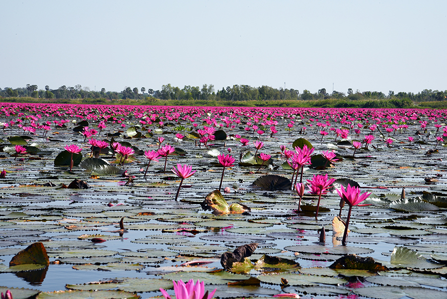 Red Lotus Lake