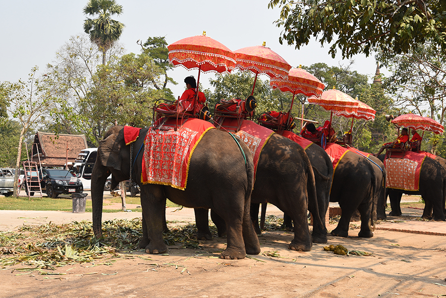 Elephants for the tourist