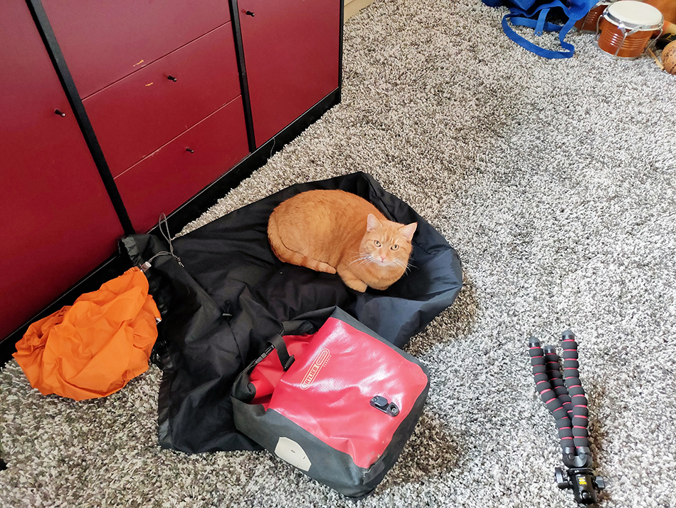 Ginger wants to come too