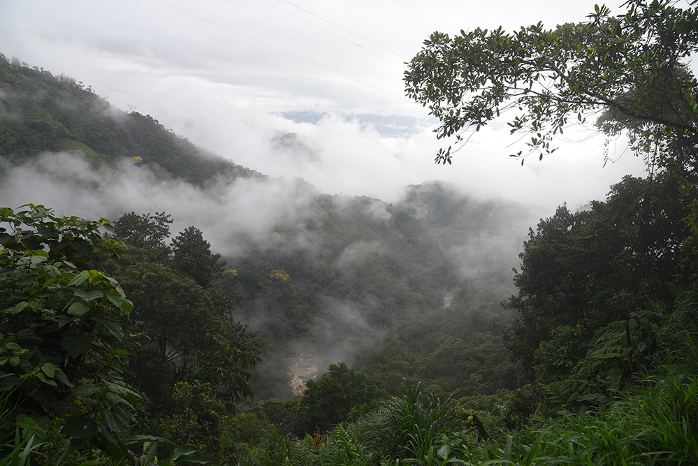 Mystical rainforest
