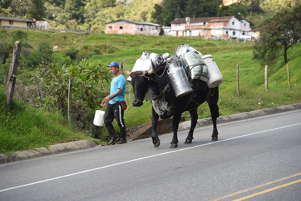 Farmer carrying  milk churns
