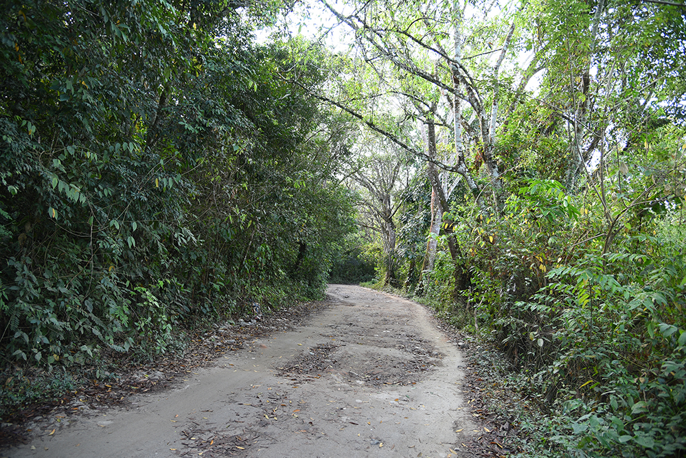 Way to the rainforest